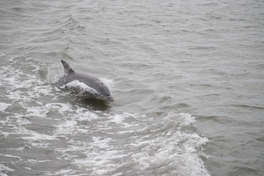 Happy Dolphin!