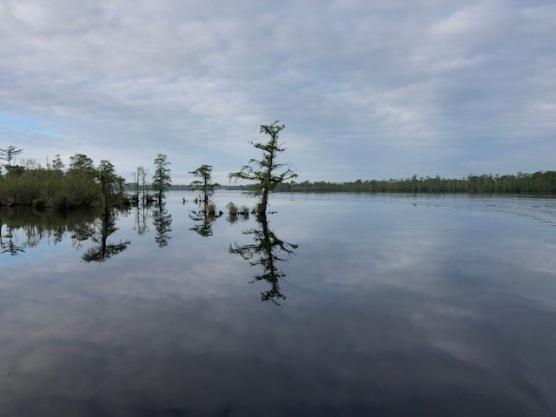 Dismal Swamp1