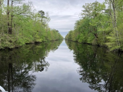 Dismal Swamp4 Reflective Waters