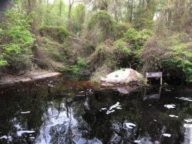 Dismal Swamp6