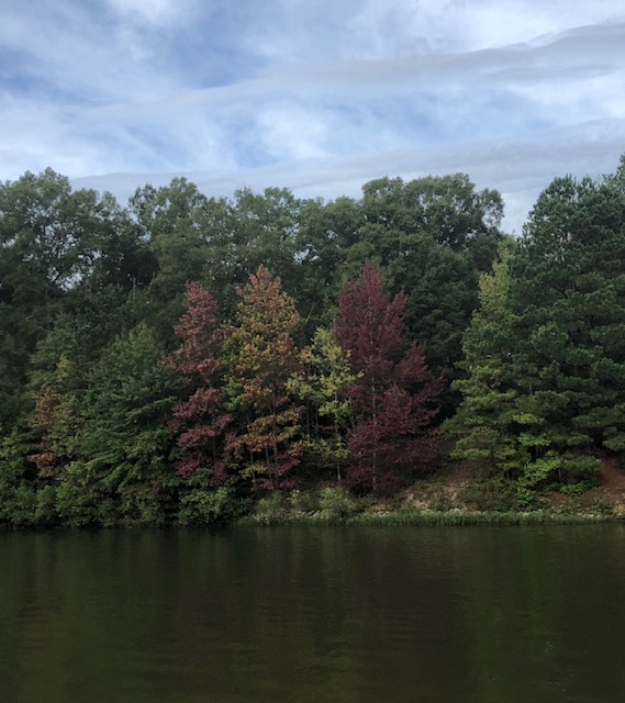 Fall Colors on the Tenn-Tom