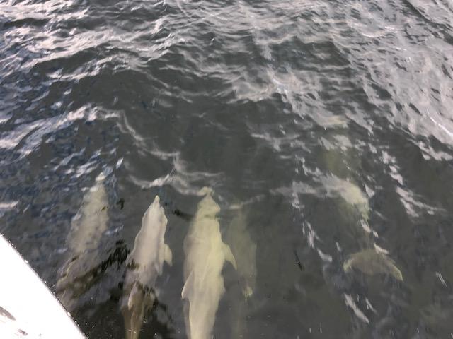 DolphinEscort